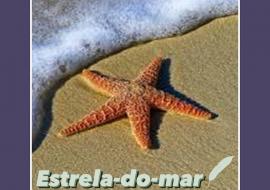 Estrela-do-mar – Scamonis